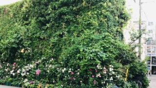 植物や花に覆われた建物