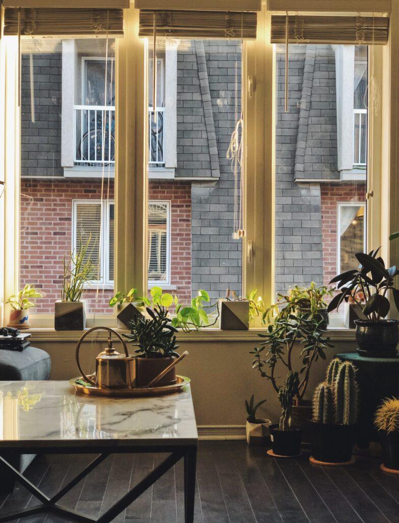 大きな窓のそばに植物やサボテンの鉢がおいてあるフローリングの部屋
