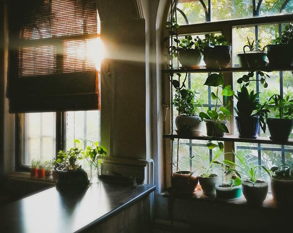 太陽の光を背景に、窓にたくさんの鉢植えのある部屋