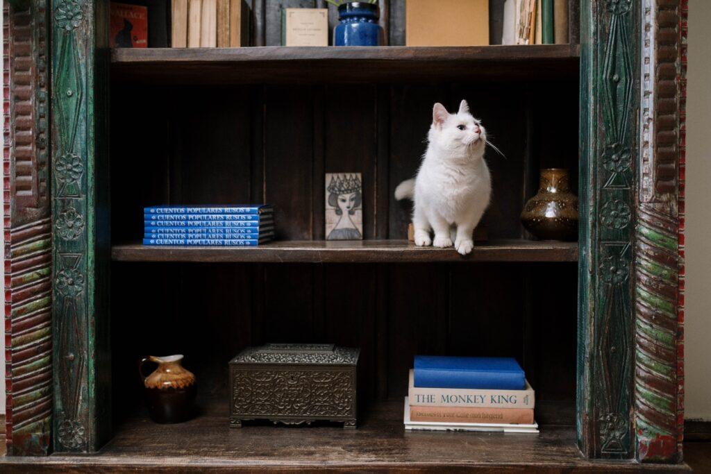 本や置物の間で白い猫が本棚の中にいる